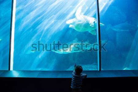 Giovane disegno pesce serbatoio acquario natura Foto d'archivio © wavebreak_media