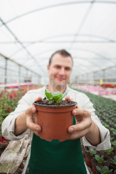 Employee holding up potted plant in greenhouse garden center Stock photo © wavebreak_media