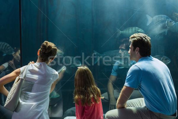 Familia mirando peces tanque acuario hombre Foto stock © wavebreak_media