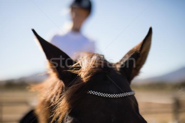 Ribbon on brown pony's forehead Stock photo © wavebreak_media