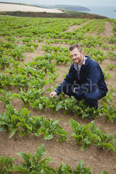 Agriculteur cultures domaine ciel homme Photo stock © wavebreak_media