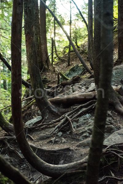 View foresta radici rocce campagna albero Foto d'archivio © wavebreak_media