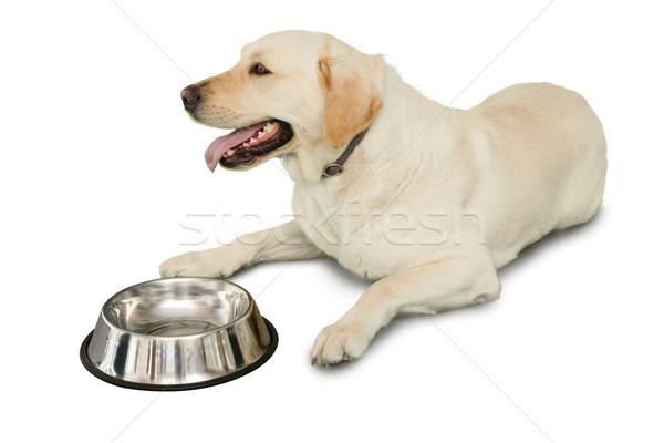 Cute labrador dog lying beside water bottle Stock photo © wavebreak_media