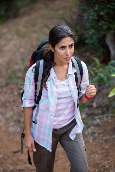 Feminino andarilho caminhada floresta belo diversão Foto stock © wavebreak_media