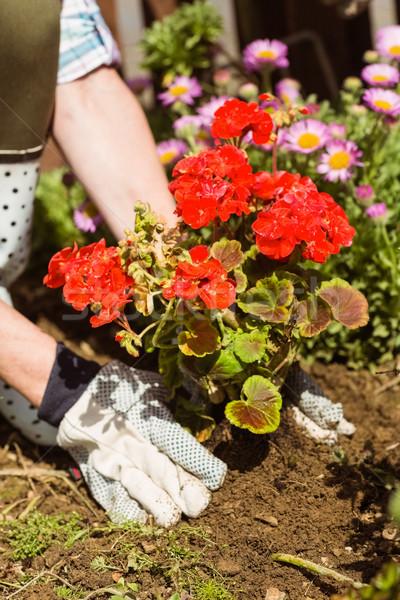 Femme rouge fleur jardin de fleurs printemps Photo stock © wavebreak_media