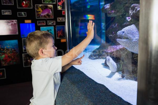 Little boy looking at fish tank Stock photo © wavebreak_media