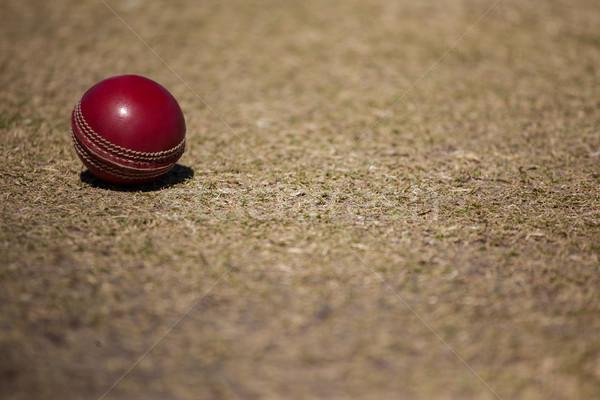 High angle view of cricket ball Stock photo © wavebreak_media