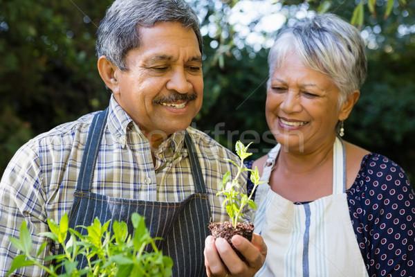 Idős pár néz facsemete növény kert boldog Stock fotó © wavebreak_media