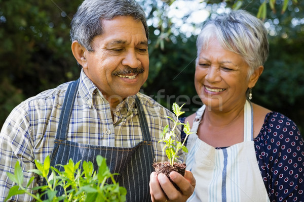 Senior couple looking sapling plant in garden Stock photo © wavebreak_media