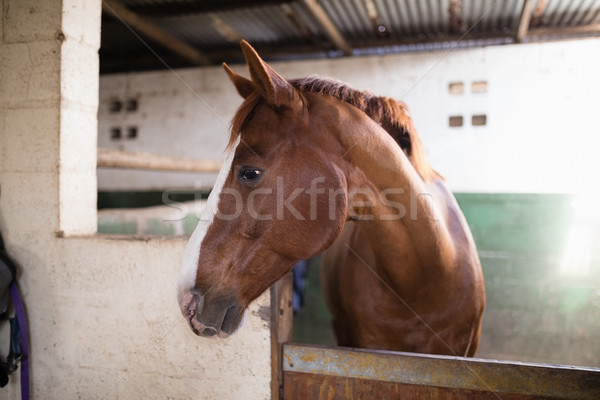 Brown horse in stable Stock photo © wavebreak_media