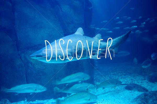 изображение открыть акула плаванию рыбы Сток-фото © wavebreak_media