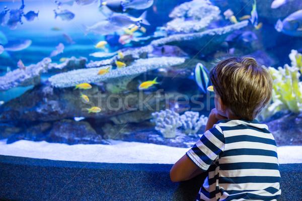 Stock fotó: Fiatalember · ül · akvárium · akvárium · hal · gyermek