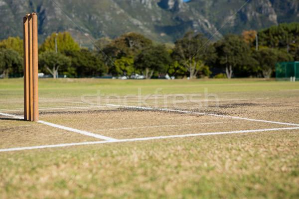 Ağaç çim spor Stok fotoğraf © wavebreak_media