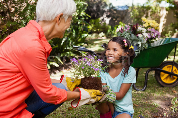 Smiling girl looking at grandmother while giving flowering pot Stock photo © wavebreak_media