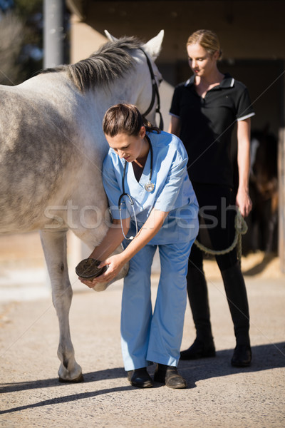 Femenino jockey mirando veterinario examinar caballo Foto stock © wavebreak_media