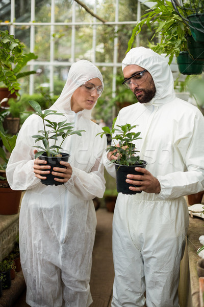 Scientists examining potted plants  Stock photo © wavebreak_media