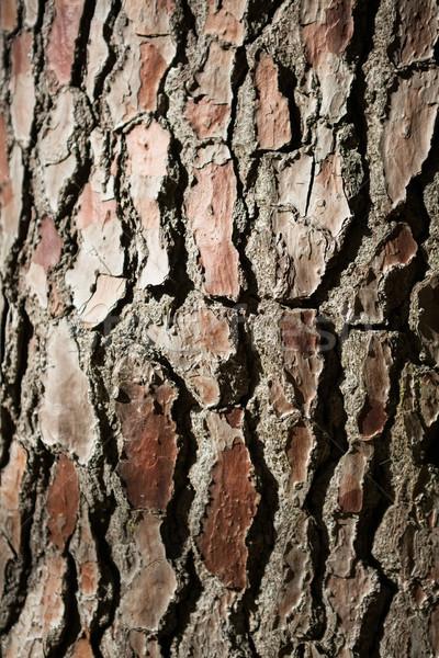 Közelkép fa ugatás erdő minta viselet Stock fotó © wavebreak_media