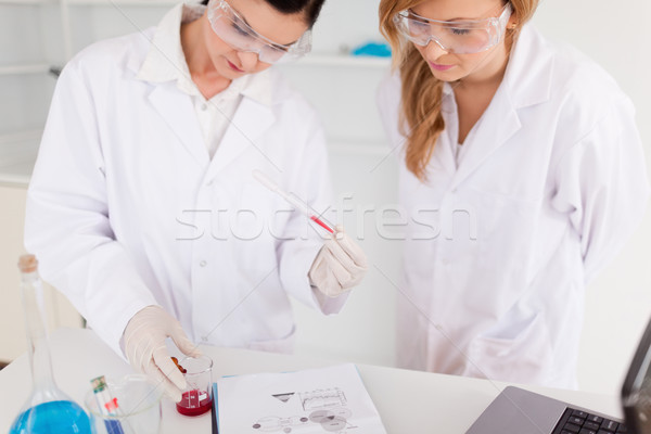 Two scientist women observing a test tube in a lab Stock photo © wavebreak_media