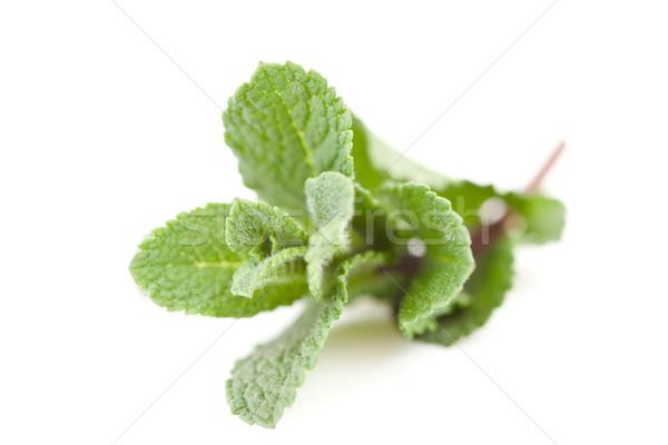 Borroso menta blanco hoja verde Foto stock © wavebreak_media