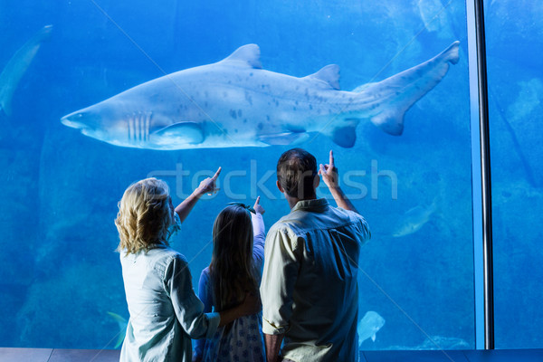 Achteraanzicht familie wijzend haai tank aquarium Stockfoto © wavebreak_media