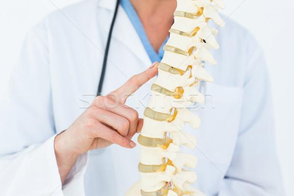 Femenino médico anatómico espina blanco atención Foto stock © wavebreak_media