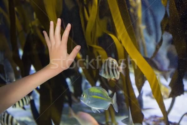 Main verre réservoir aquarium femme poissons Photo stock © wavebreak_media