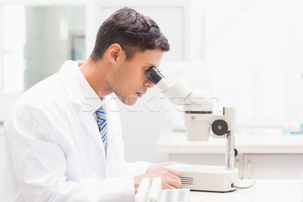 Concentrated scientist observing petri dish with microscope Stock photo © wavebreak_media