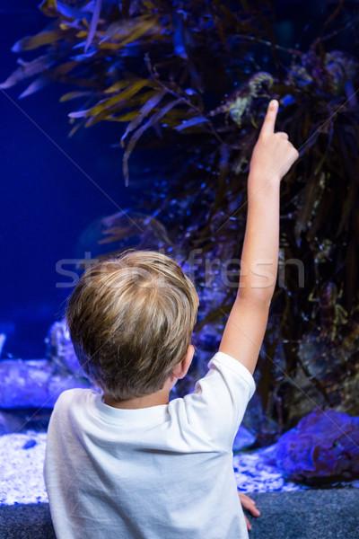 Młody człowiek wskazując coś zbiornika akwarium dziecko Zdjęcia stock © wavebreak_media