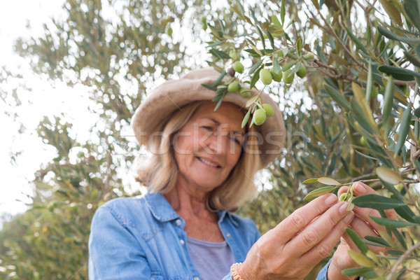 Happy woman harvesting olives from tree Stock photo © wavebreak_media