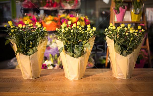Três planta tabela negócio flores Foto stock © wavebreak_media