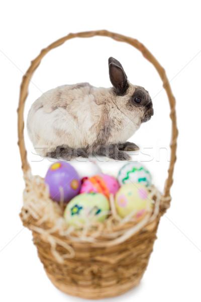 Soffice coniglio basket easter eggs bianco Pasqua Foto d'archivio © wavebreak_media