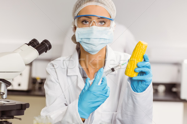 Food scientist injecting a corn cob Stock photo © wavebreak_media