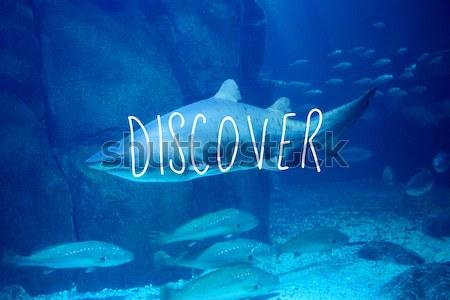Köpekbalığı yüzme balık tank deniz mavi Stok fotoğraf © wavebreak_media
