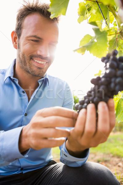 Mosolyog férfi megérint szőlő szőlőskert napos idő Stock fotó © wavebreak_media
