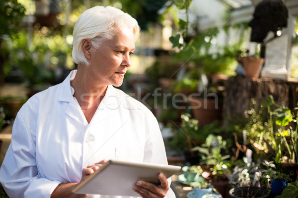 Female scientist observing plants at greenhouse Stock photo © wavebreak_media