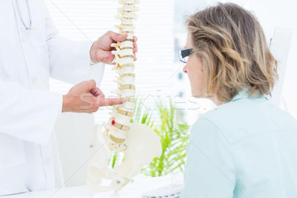 Foto d'archivio: Medico · punta · anatomica · colonna · vertebrale · medici · ufficio