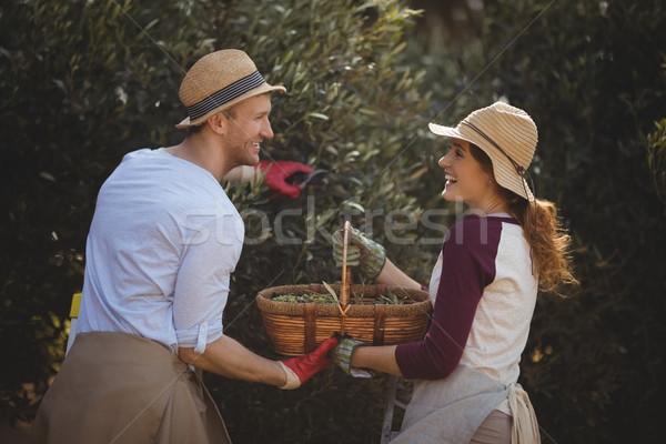 Alegre aceitunas granja mujer Foto stock © wavebreak_media