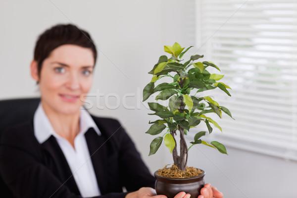 Ofis çalışanı bitki ofis çalışmak yürütme Stok fotoğraf © wavebreak_media
