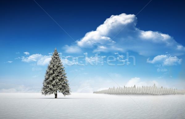 Fir tree in snowy landscape Stock photo © wavebreak_media