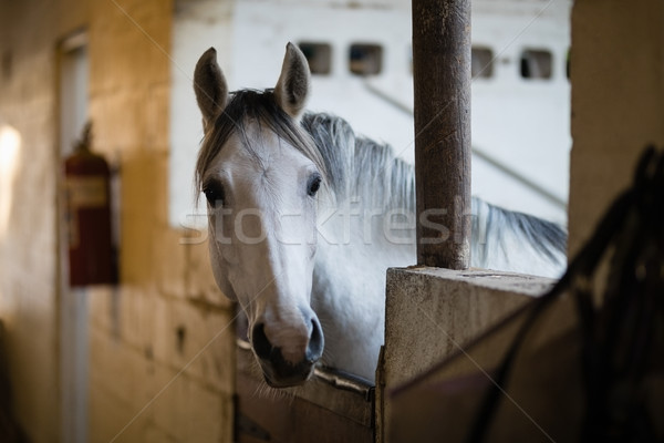 Close up of horse in stable Stock photo © wavebreak_media