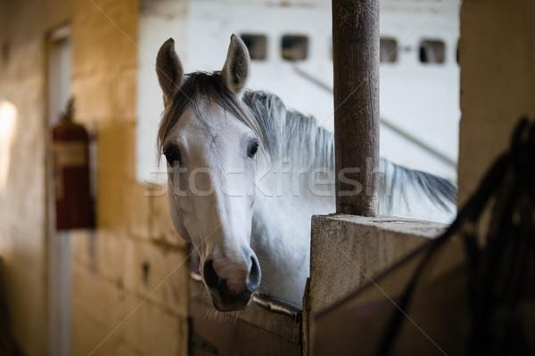 Paard stabiel hout muur Stockfoto © wavebreak_media