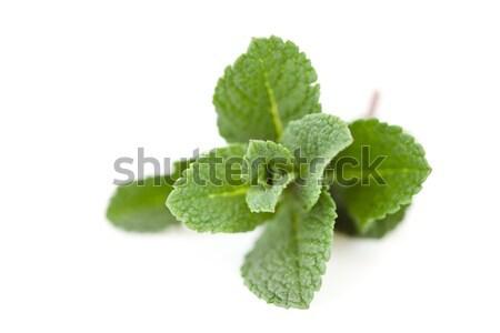 Mint weiß Blatt grünen Kochen Stock foto © wavebreak_media