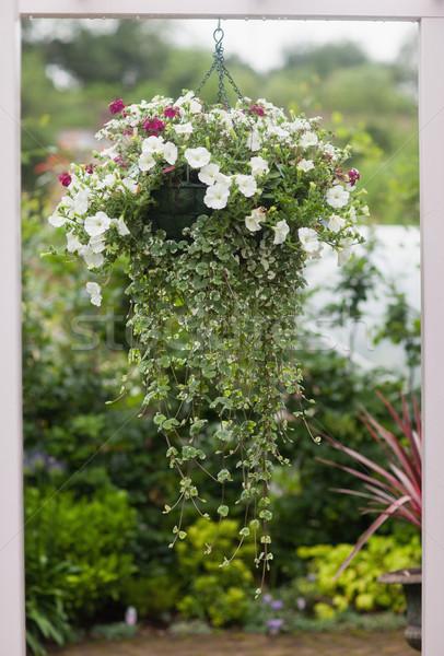 Hanging flower pot outside through a window Stock photo © wavebreak_media