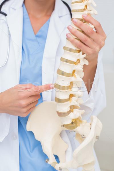 女性 医師 解剖学の 背骨 画像 クリニック ストックフォト © wavebreak_media