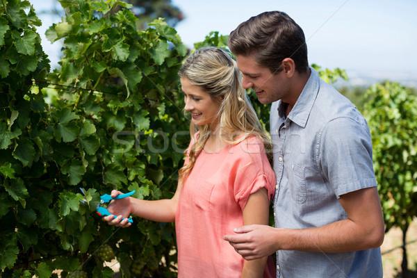 Happy couple using pruning shears at vineyard Stock photo © wavebreak_media