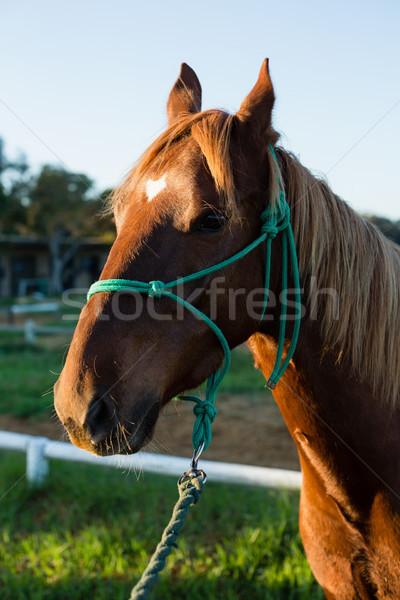 Caballo pie rancho profesional estilo de vida Foto stock © wavebreak_media