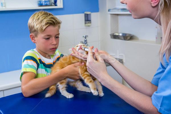 A woman vet putting down a kitten Stock photo © wavebreak_media