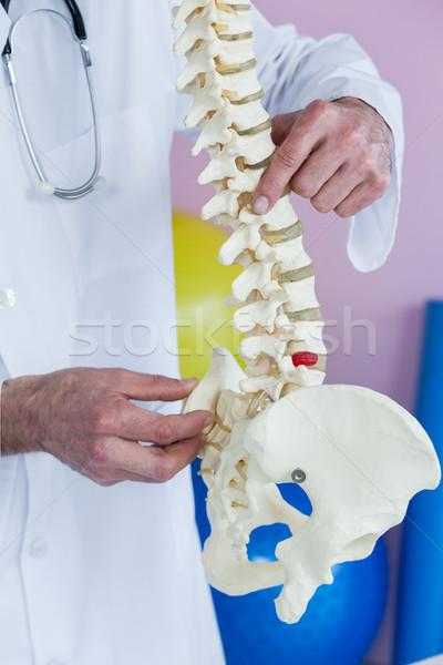 Mid section of physiotherapist examining a spine model Stock photo © wavebreak_media