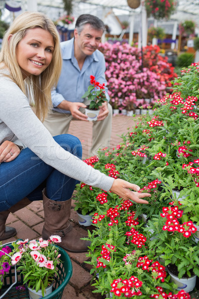 Couple crouching to look at red flowers in garden center Stock photo © wavebreak_media