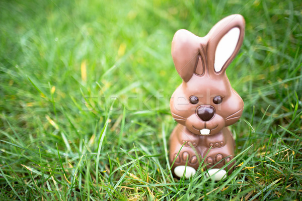 Chocolade bunny vergadering gras witte oren Stockfoto © wavebreak_media